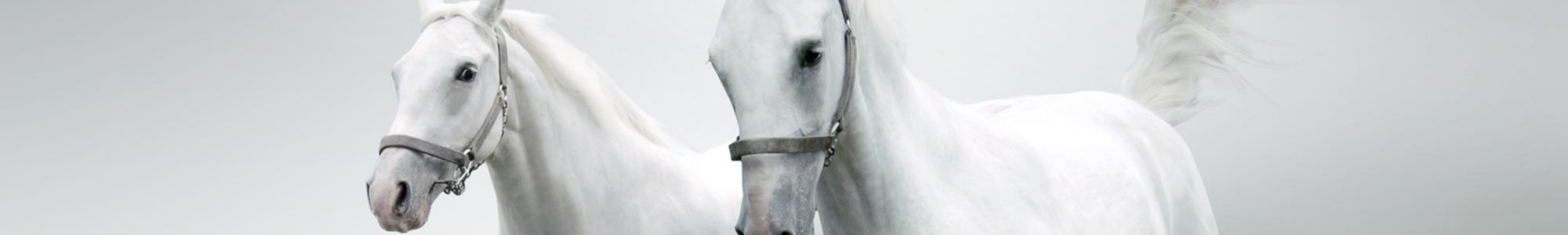 Nowe produkty - Art-horse Sklep jeździecki