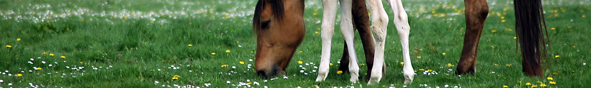 Promocje - Art-horse Sklep jeździecki