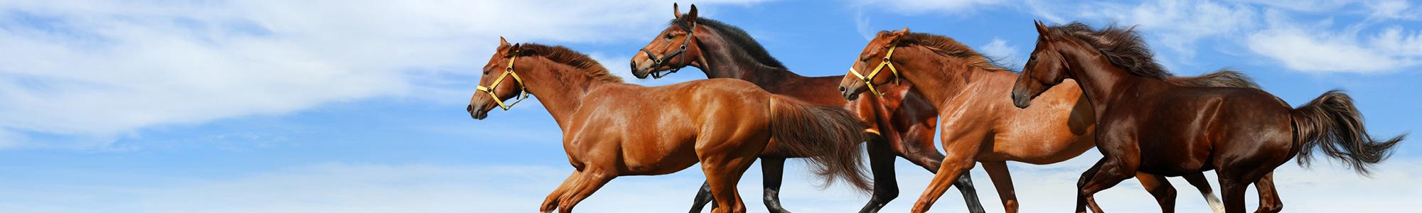 Polarowe / osuszające - Art-horse Sklep jeździecki