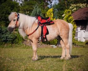 Zestaw siodło western pony