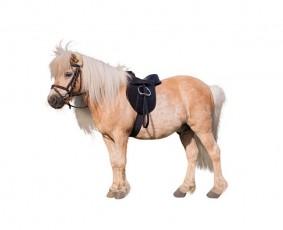 Siodło z wyposażeniem Kerbl Pony Economy